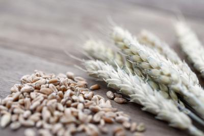 grain-hulls